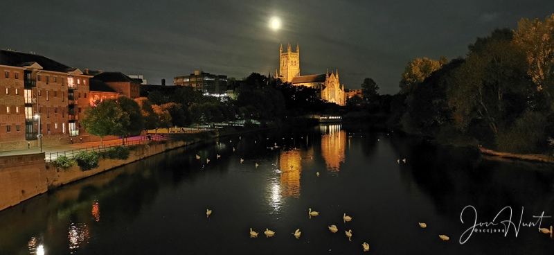 Moonlight Swans