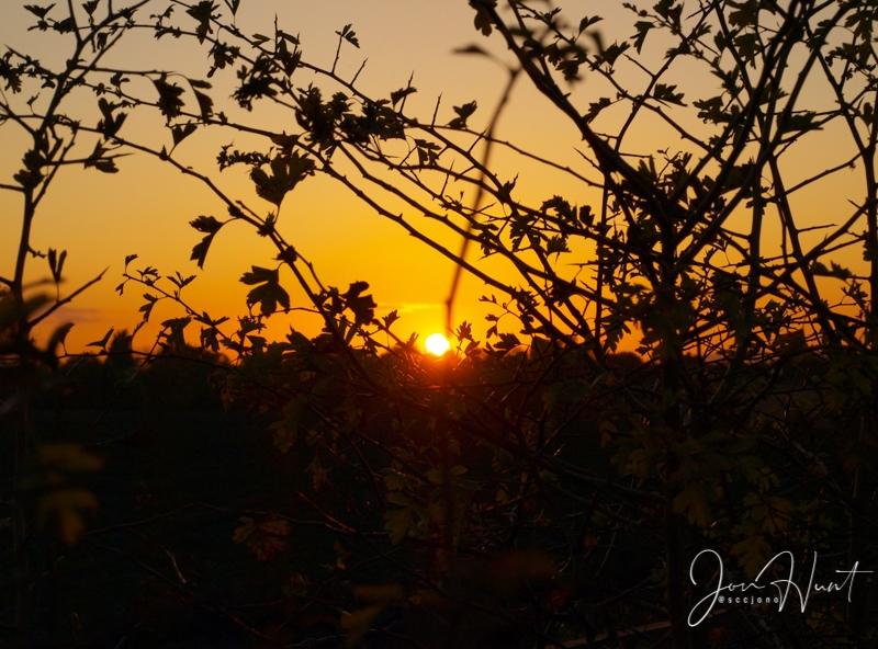 Bramble Sunset