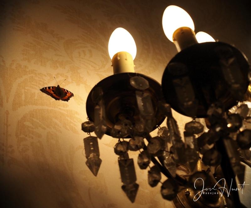 Light Rest