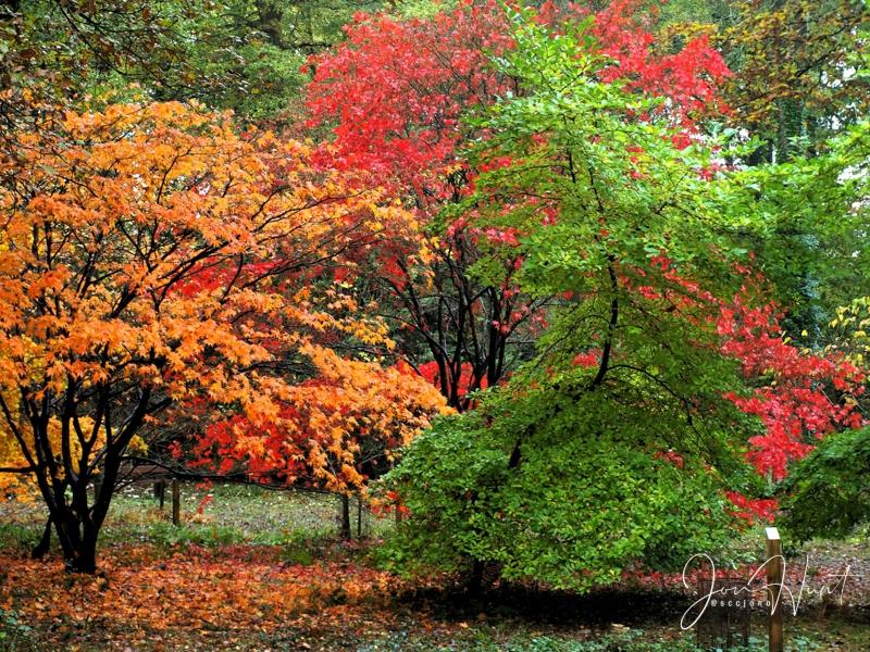 Autumn Flavours