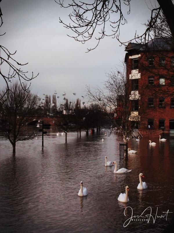 Quay Flood