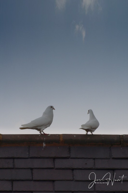 Rooftop Lovers