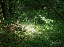 Oasis of Light