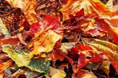 Autumnal Solstice